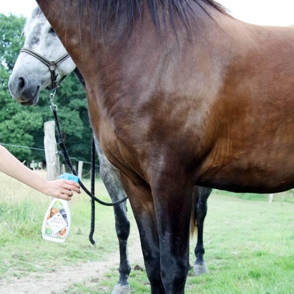 Application d'Alt'o Zinsect spray sur cheval - Vue 3