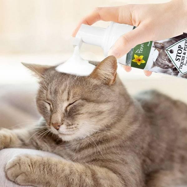 Application du STOP puces et tiques mousse sur un chat