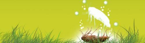 Insecticides & Répulsifs