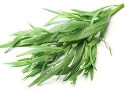 L'estragon - Artemisia dracunculus