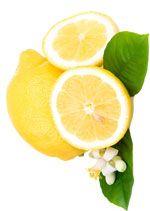 Citron - Citrus limon