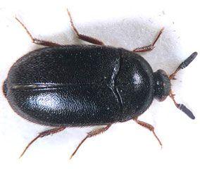 Insectes De Nos Maisons