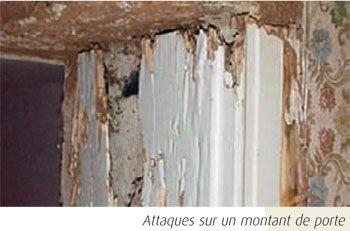 dégâts causés par les termites