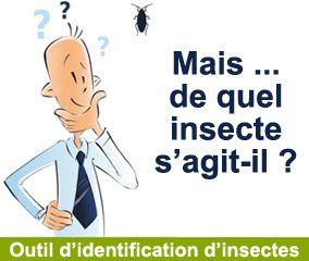 Outil d'identification d'insecte