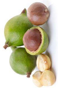 Graines de Macadamia bio