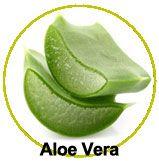 Zoom sur l'Aloe Vera