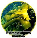 Extrait d'algues marines