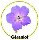 Actif principal de ce collier : le géraniol