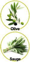 Principaux actifs pour le shampooing douche Olive Sauge