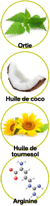 Actifs ortie bio, huile de coco, huile de tournesol et arginine