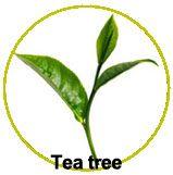 Actifs huile essentielle de Tea tree