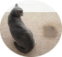 Agir contre l'urine de chat sur un tapis