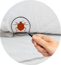 comment détecter la présence de punaises de lit ?