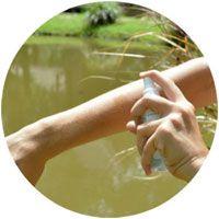 Repousser les insectes grâce à l'eucalyptus citriodora