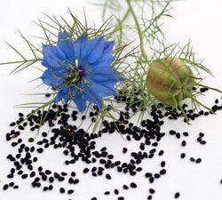 Graines et fleurs de nigelle bio