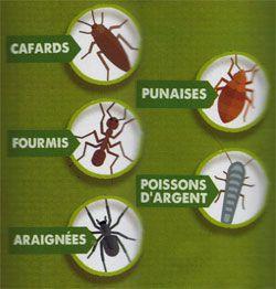 Cibles répulsifs pour insectes rampants Aries
