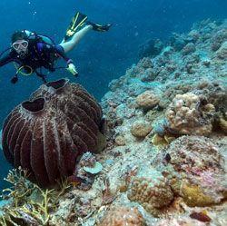 Récolte d'éponges de mer