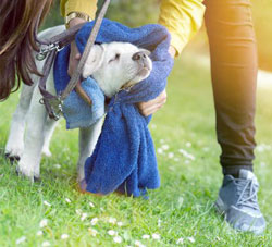 application shampooing sec insectifuge pour chat ou chien