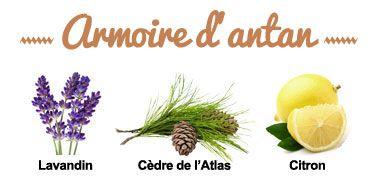 Composition de la synergie Armoire d'Antan
