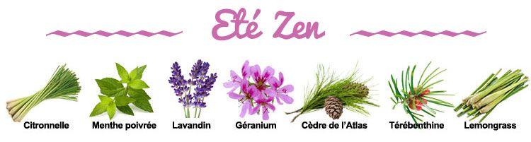 Composition de la synergie Ete Zen