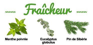 Composition de la synergie Fraîcheur