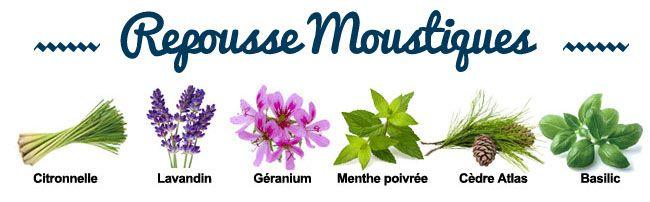 Composition de la synergie Repousse Moustiques